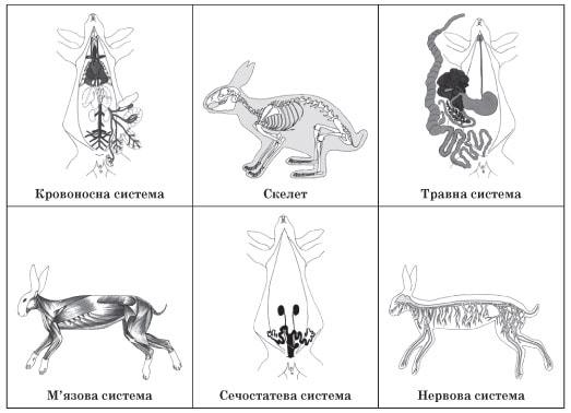 Системи органів кроля