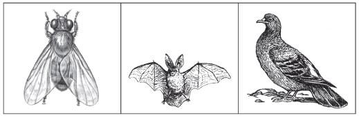 Літаючі тварини