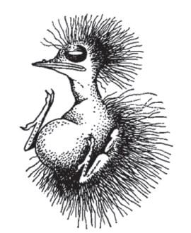 Нагніздне пташеня