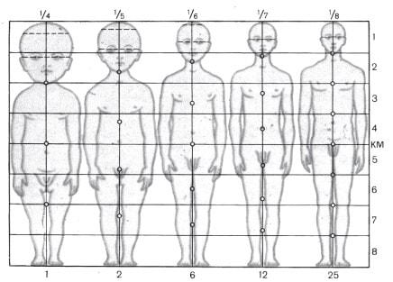 Зміни пропорцій тіла людини в процесі онтогенезу