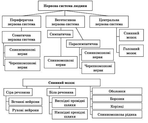 Нервова система людини