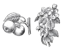 Автотрофний організм (рослина)